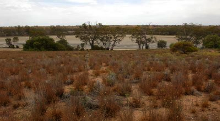The Murray River at Swan Reach in South Australia. The wetlands have dried up as the flow of the water has reduced.  Image: Murray Darling Water Authority.