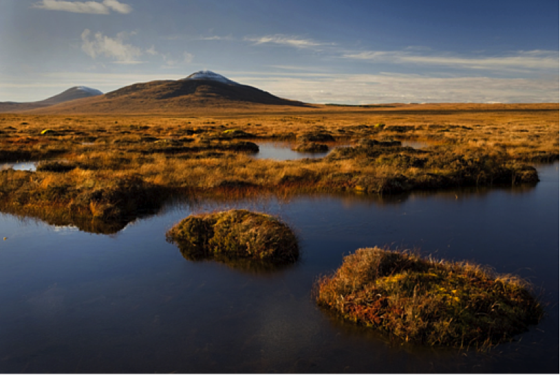 Peatlands in Forsinard, United Kingdom.    I    mage:   RSPB   .