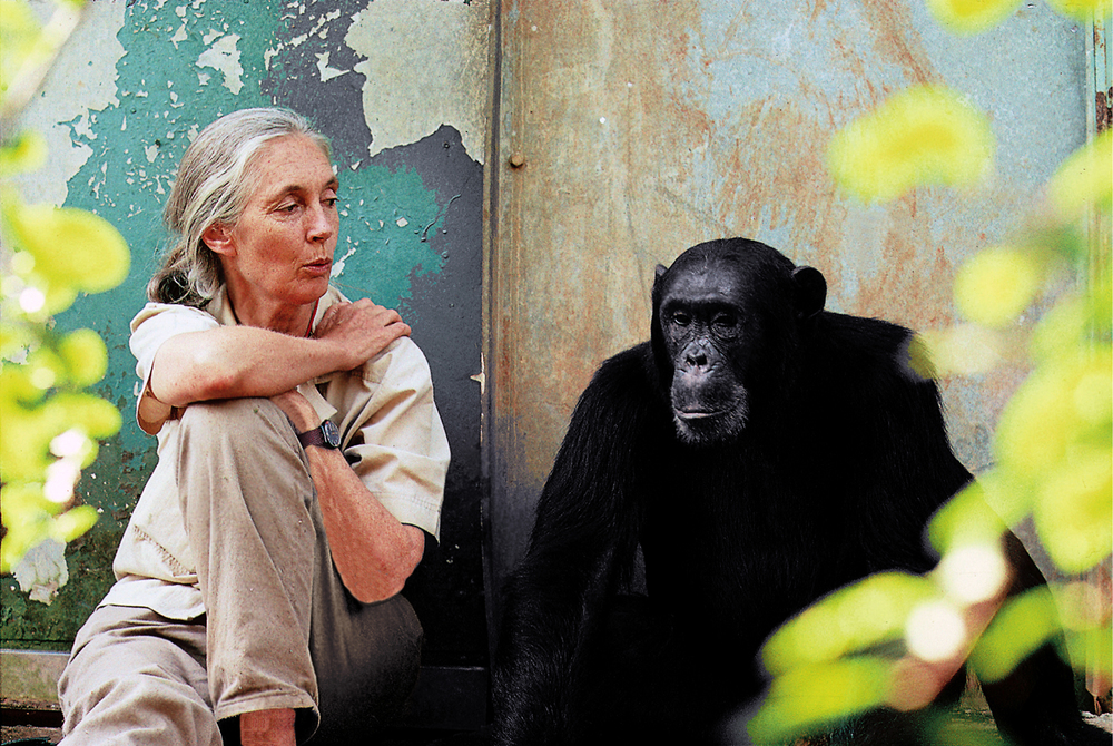 Dr Jane Goodall and Freud at Gombe.  Image: Michael Neugebauer / J ane Goodall Institute of Australia