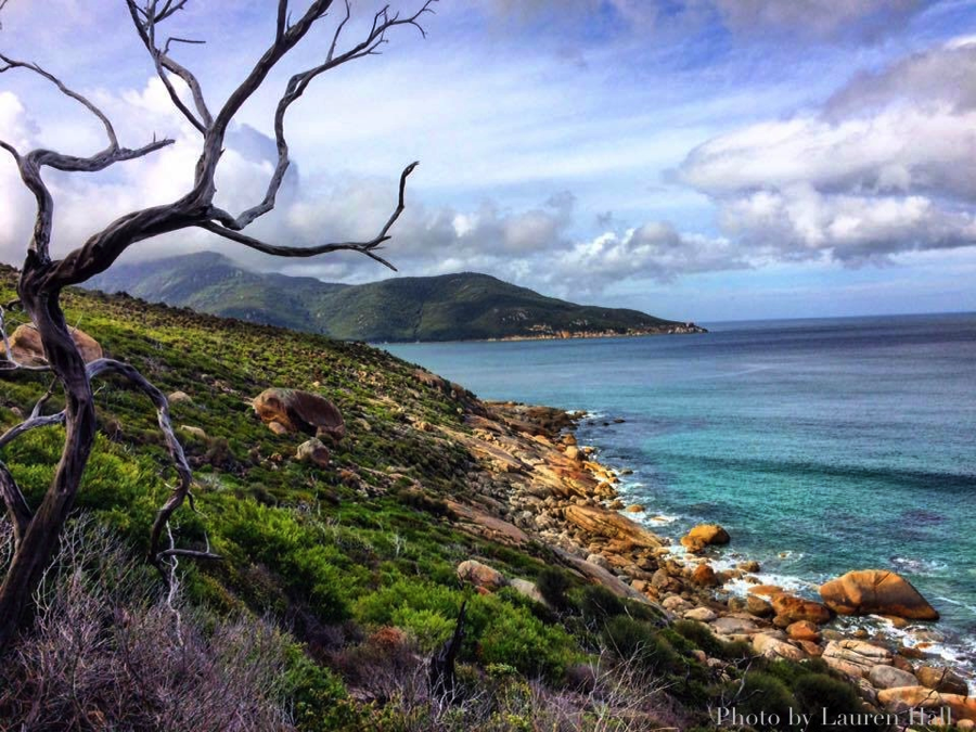 View along Tidal River to the Oberon Bay hiking trail. Image: Lauren Hall