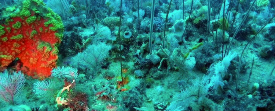 An underwater viewpoint courtesy of an ROV.   Image: Parks Victoria