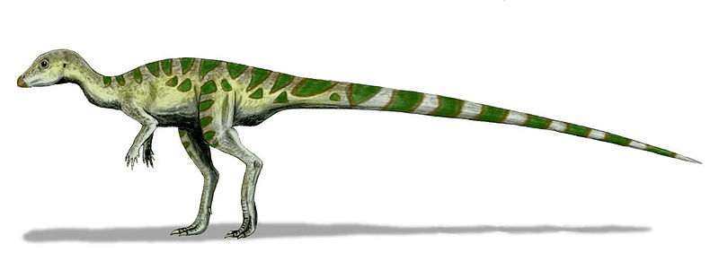 Leaellynasaura would once have found habitat not far from Cape Otway. Image courtesy of Nobu Tamura [CC BY 3.0], from Wikimedia Commons.