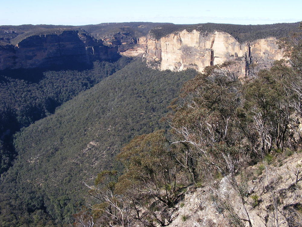 The Blue Mountains owe their name - and colour! - to the eucalypts that dominate the landscape.  Image: Adam J.W.C. via Wikimedia Commons.