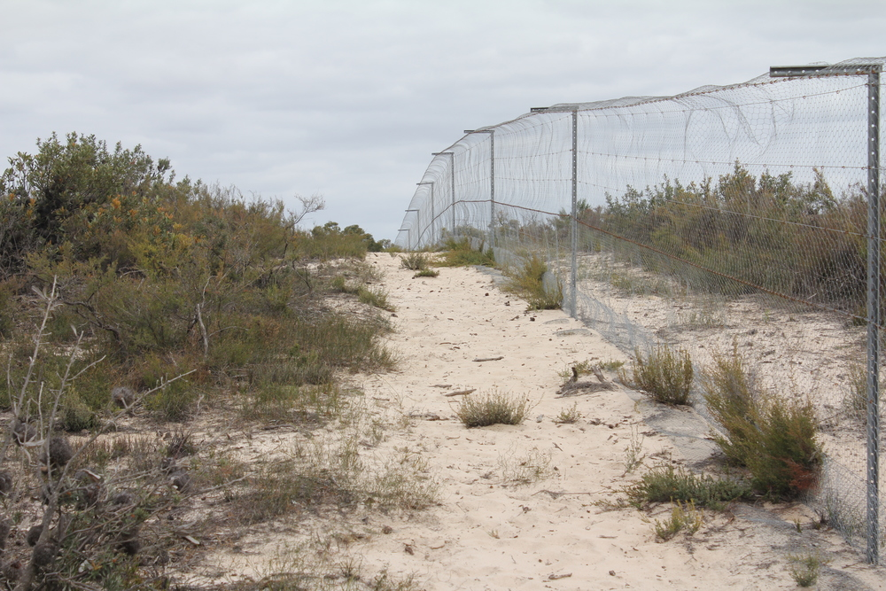 The Little Desert Nature Lodge's predator-proof fences will keep the rewilded species safe from invasive predators, as well as provide a controlled environment in which to conduct the management experiments.  Image: Billy Geary