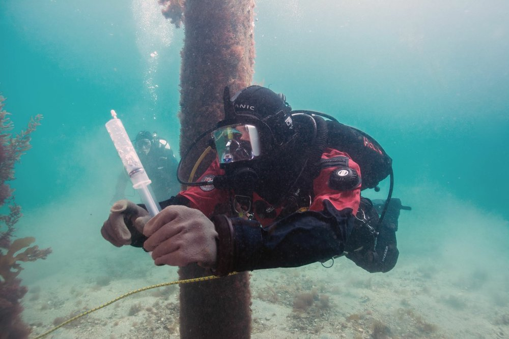 A diver is ready to glue. Photo credit: Flavien Foncin