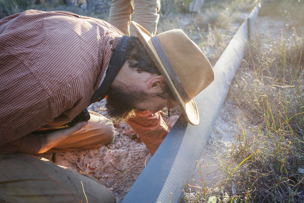 Dr Dave Watson (FAUNA Research Alliance) inspects a pitfall trap  Photo: Robert Geary