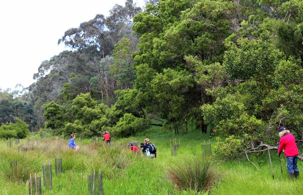 Revegetation in action along the Yarra River. Image: Leonardo Guida