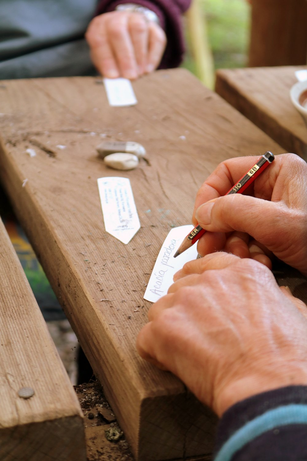 Writing plant ID tags for seedlings. Image: Leonardo Guida