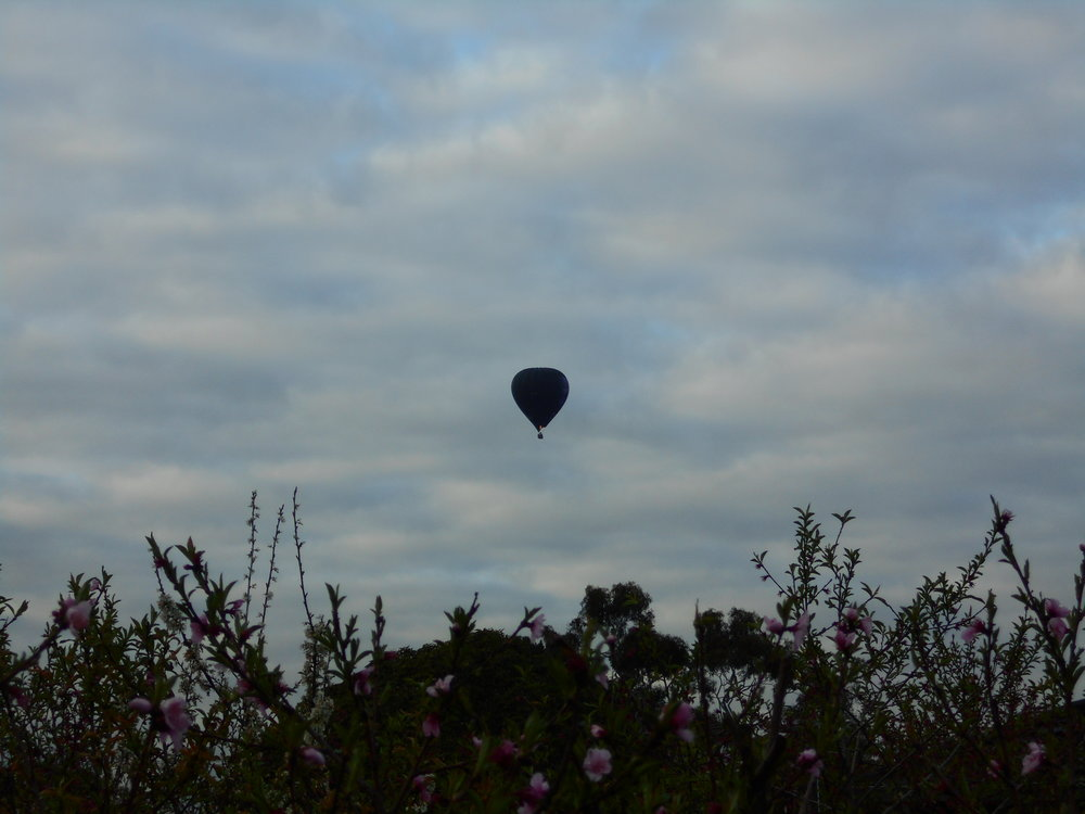 In certain weather, hot-air balloons are not an uncommon sight over Melbourne. Image: Bruna Costa