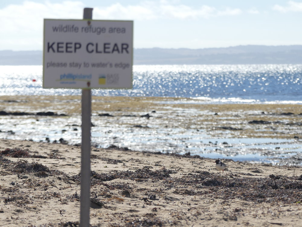 Signs on the beach indicate to the public that they should stay on the water's edge if there are hoodies nesting nearby.  Image: Sonia Sanchez Gomez