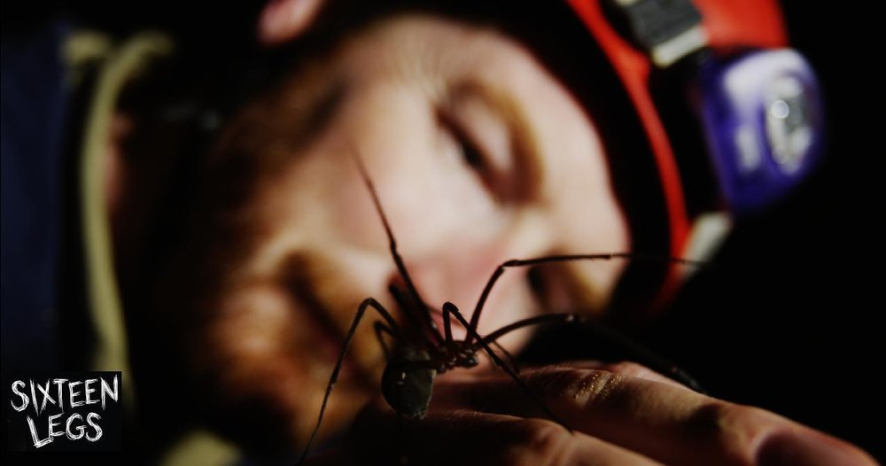 Niall Doran coming face to face with a Tasmanian cave spider.  Image: Joe Shemesh/Bookend Trust