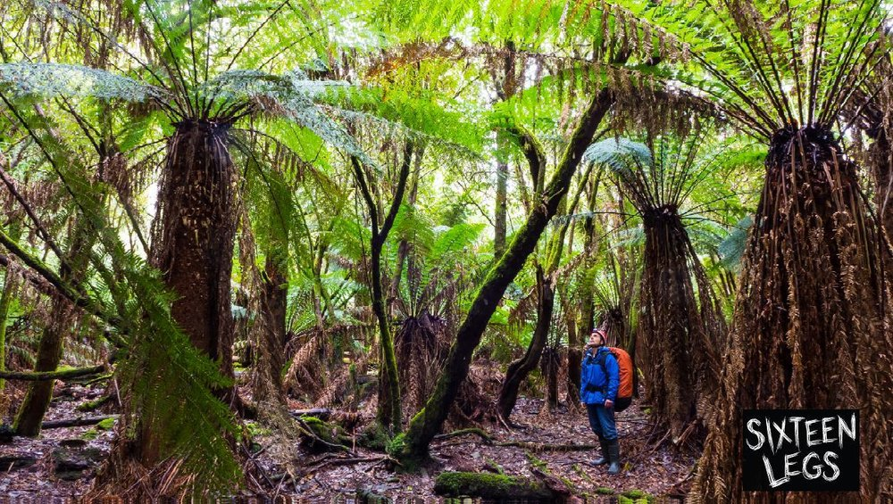 In addition to the caves and their arachnid residents, there is so much more to love about Tasmania's natural history, some highlights of which are also included in the film.  Image: Joe Shemesh/Bookend Trust