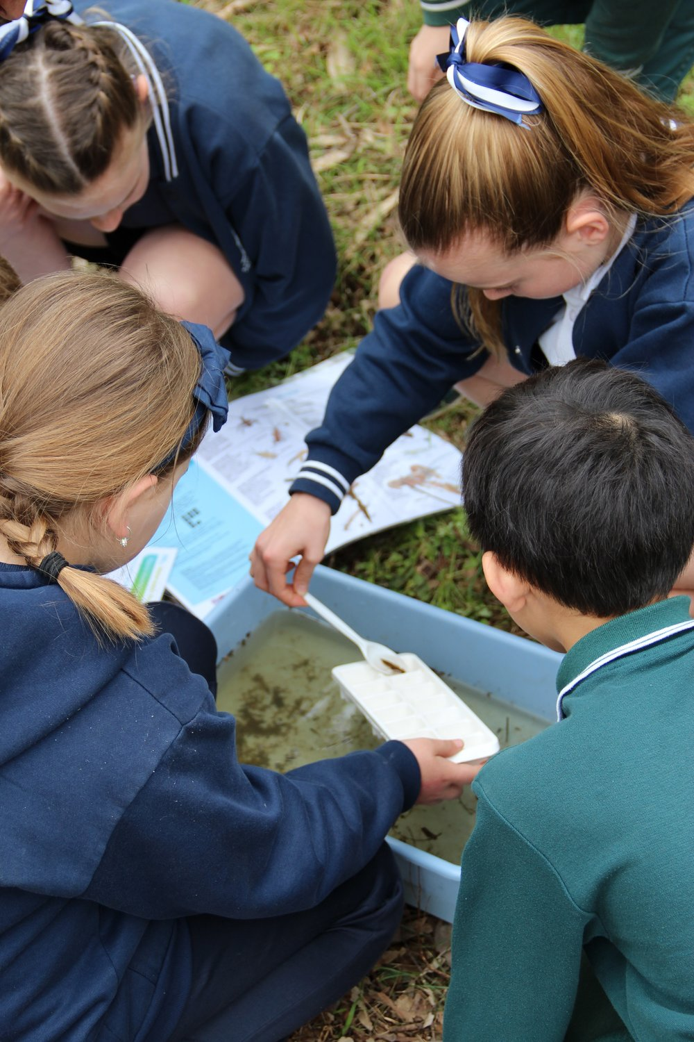 Children looking at water bugs in Currawong Bush Park.  Image: Shaun Blackburn