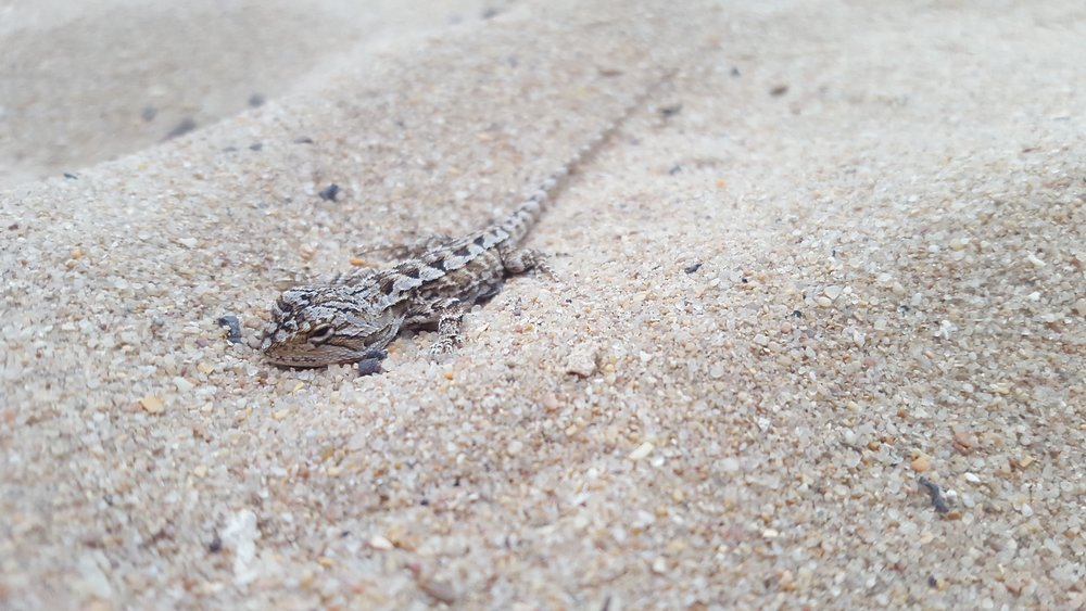 Watch out for creatures like this little dragon on your run! Image: Cathy Cavallo.