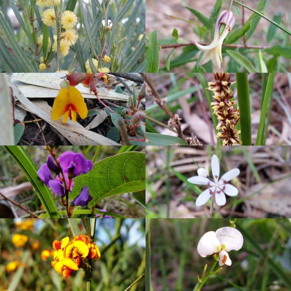 Just some of the beautiful floral species to be found in the restored reserve.  Image: Robert Pergl