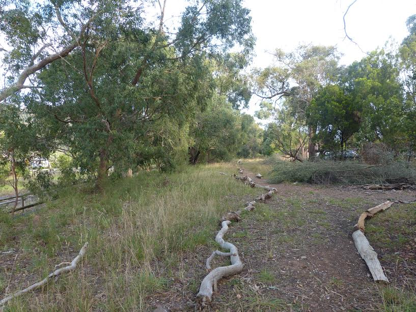 The same section of the reserve following wood weed removal. Image: Robert Pergl