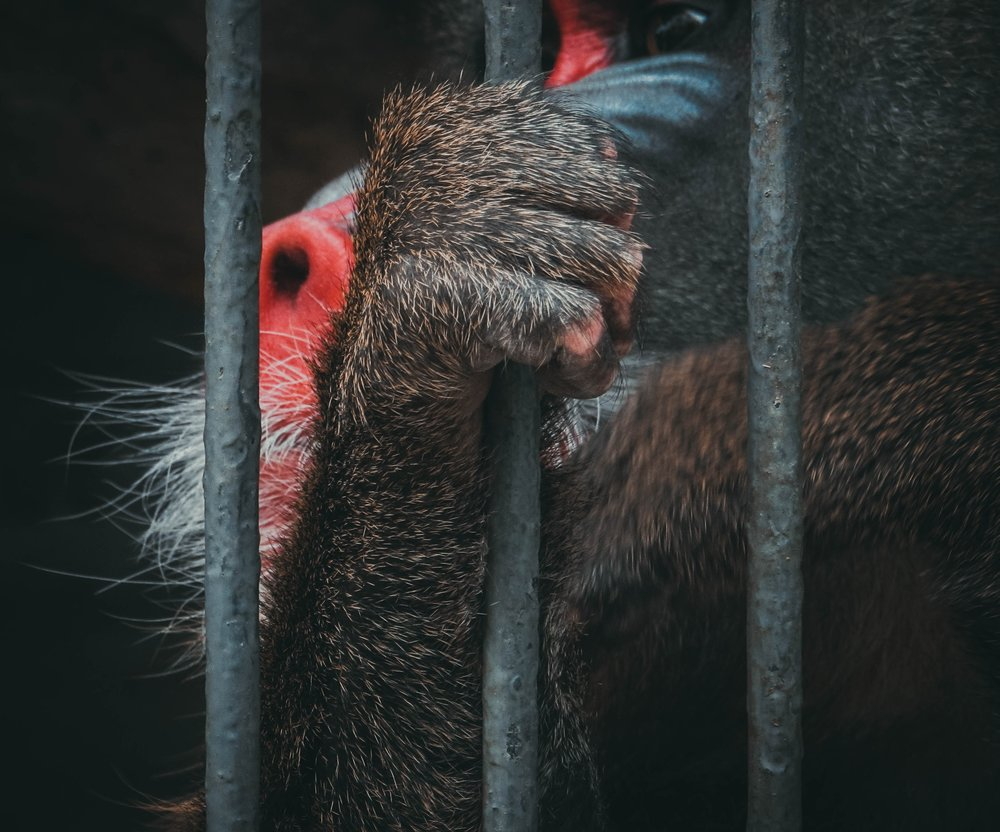Gray defines what a modern-day, well-run zoo looks like compared to those which are severely under-resourced and poorly managed.  Image:  Elmira G.  on  Unsplash