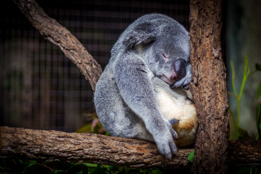 How can we ensure that Australian zoos remain places of refuge for both native and non-native species?  Image:  Cris Saur  on  Unsplash