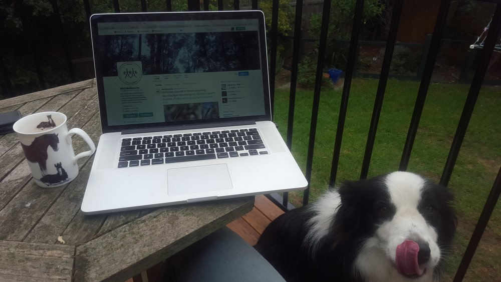 Cathy looks out for birds while doing some work in her backyard. Image: Cathy Cavallo.
