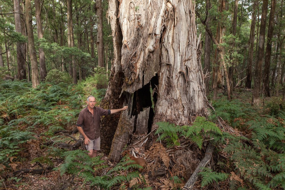 Simeon Ayres believes that encouraging others to develop a deep connection with the Strathbogie State Forest is vital in ensuring its protection.  Image: Michael Flett