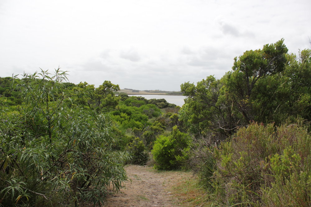 Livingstone Island Nature Walk before reaching the saltmarshes.  Image: Elodie Camprasse