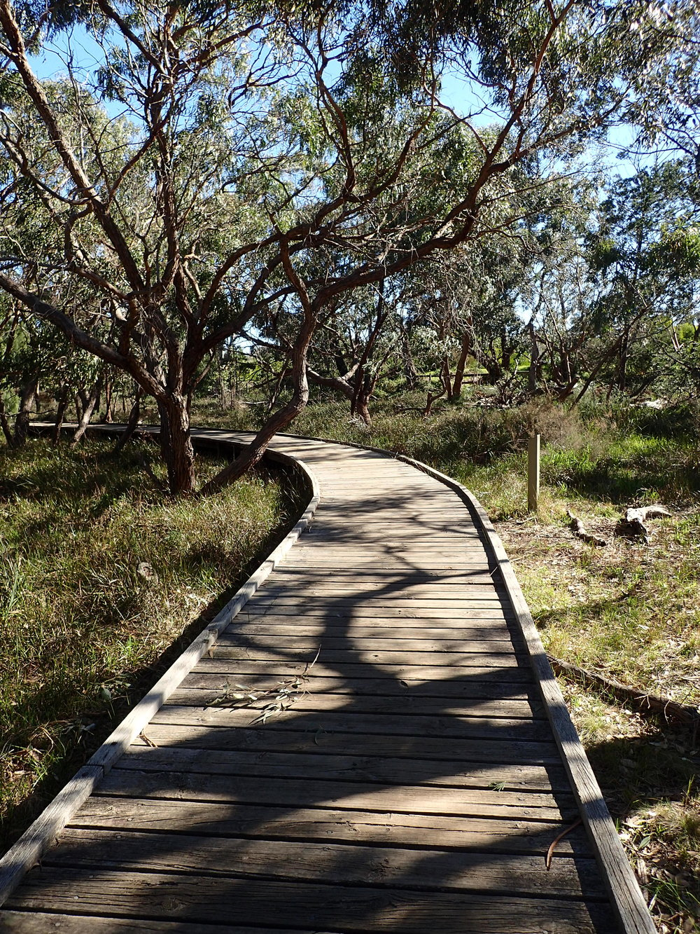 A boardwalk through the trees at Long Hollow Reserve.  Image: Lyndsey Vivian