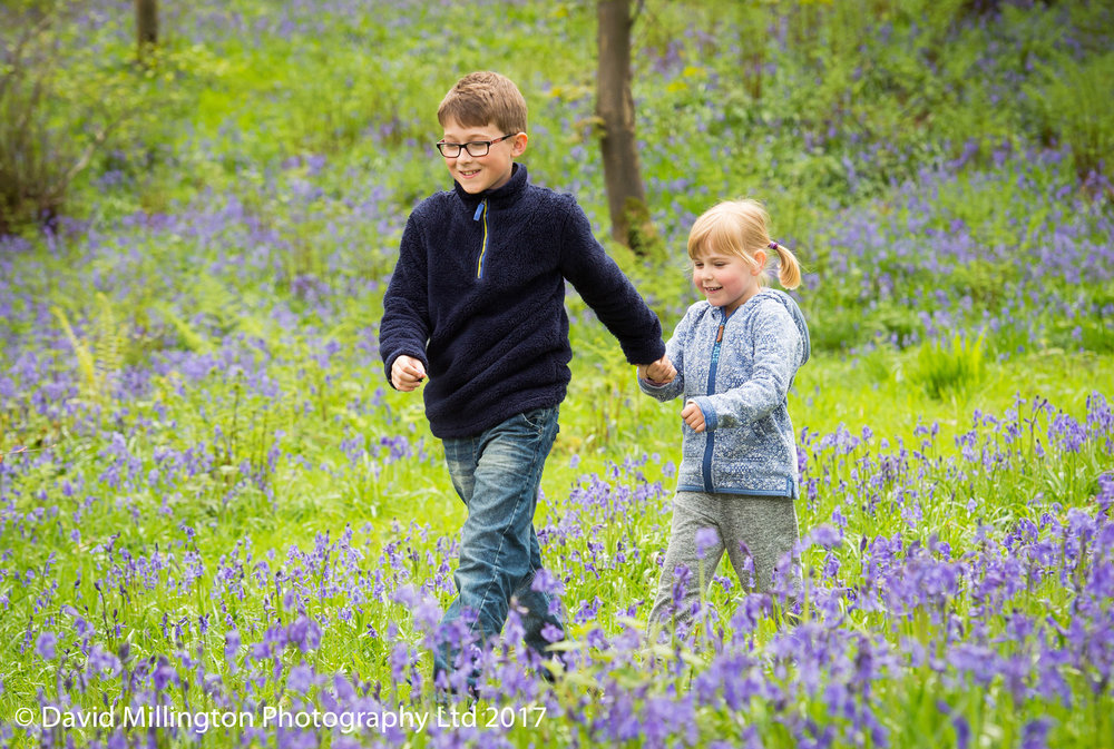 Bluebell woods lifestyle family portrait session