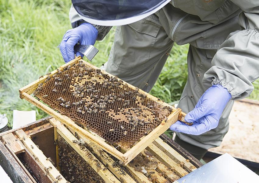 Bee Inspector- 01