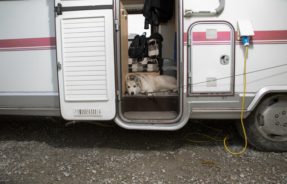 Dogs-Caravan-2.jpg