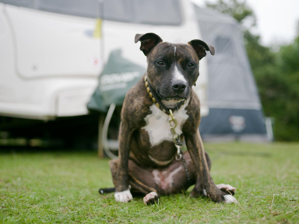 Dogs-Caravan-3.jpg