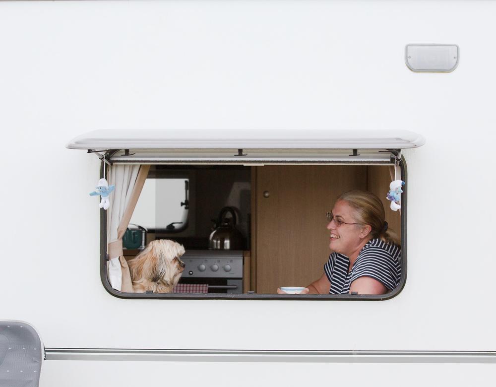Dogs-Caravan-4.jpg