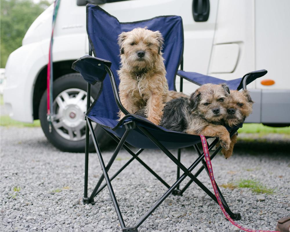 Dogs-Caravan-8.jpg