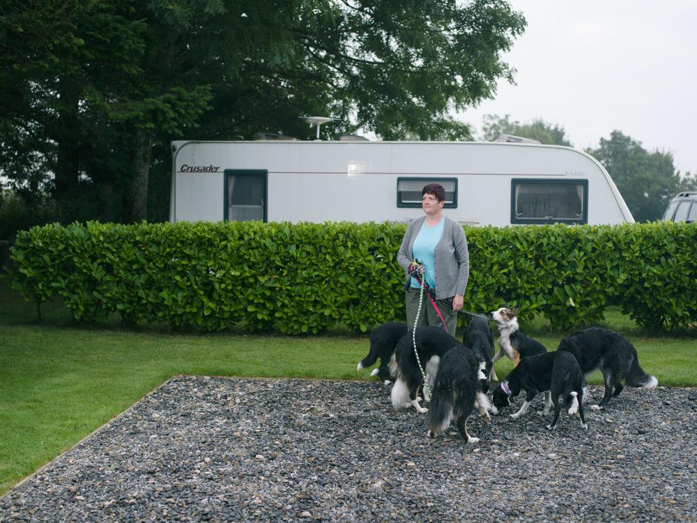 Dogs-Caravan-10.jpg