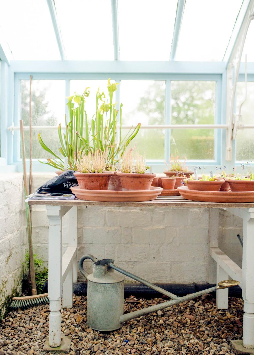 Inside Charles Darwin's greenhouse