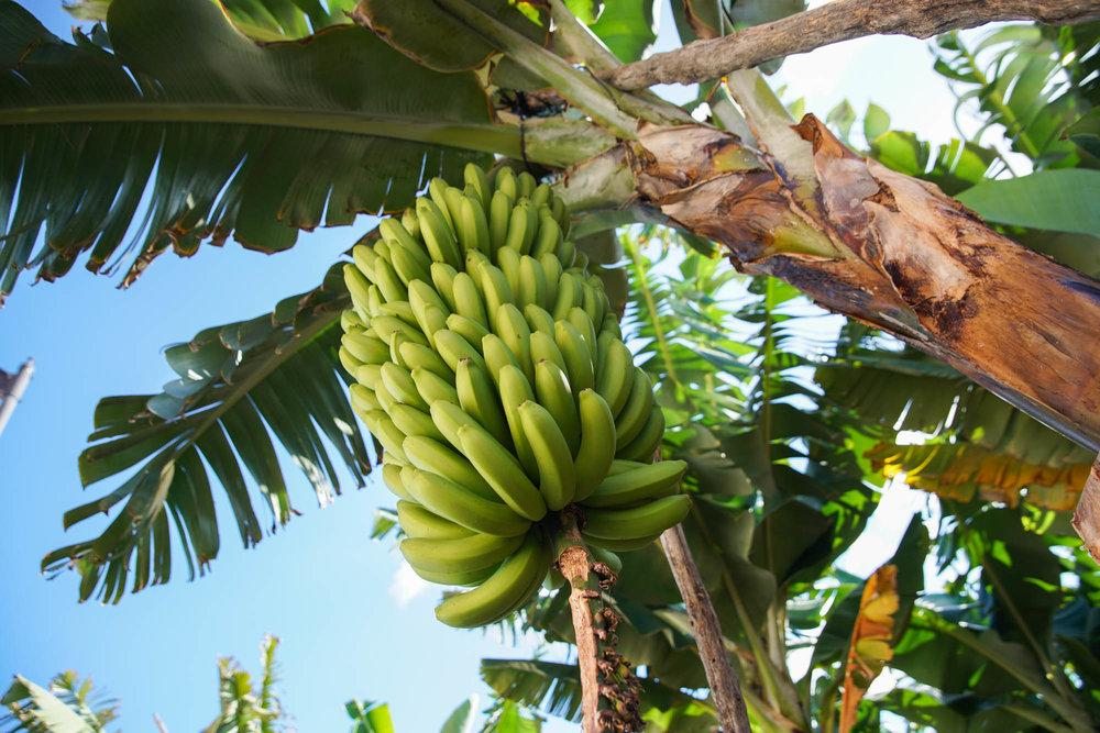 FB La Palma-24.jpg