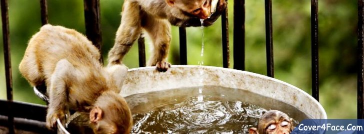 water-animal-bathing-funny-monkeys-drinking.jpg