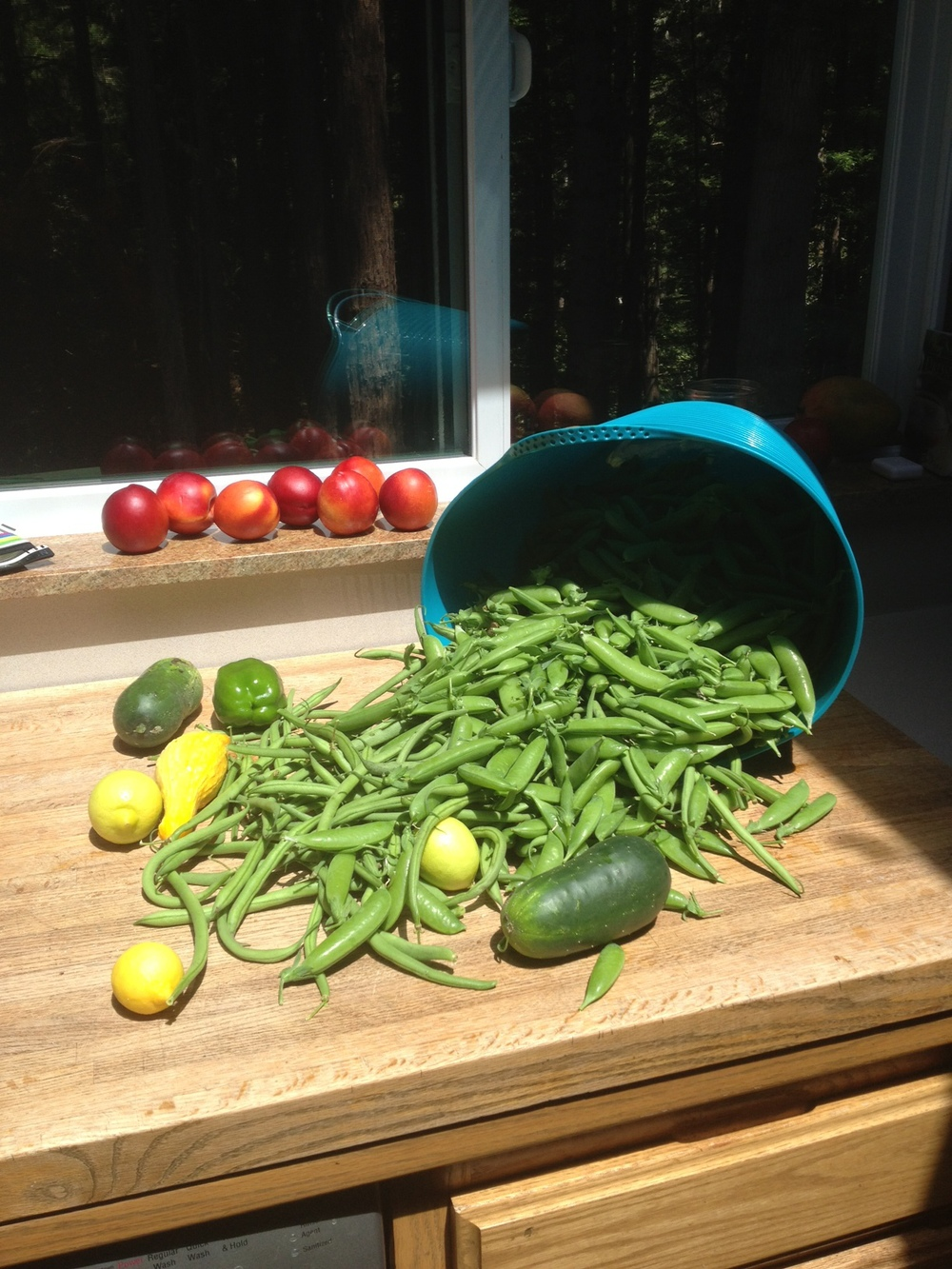 The first crop from the garden
