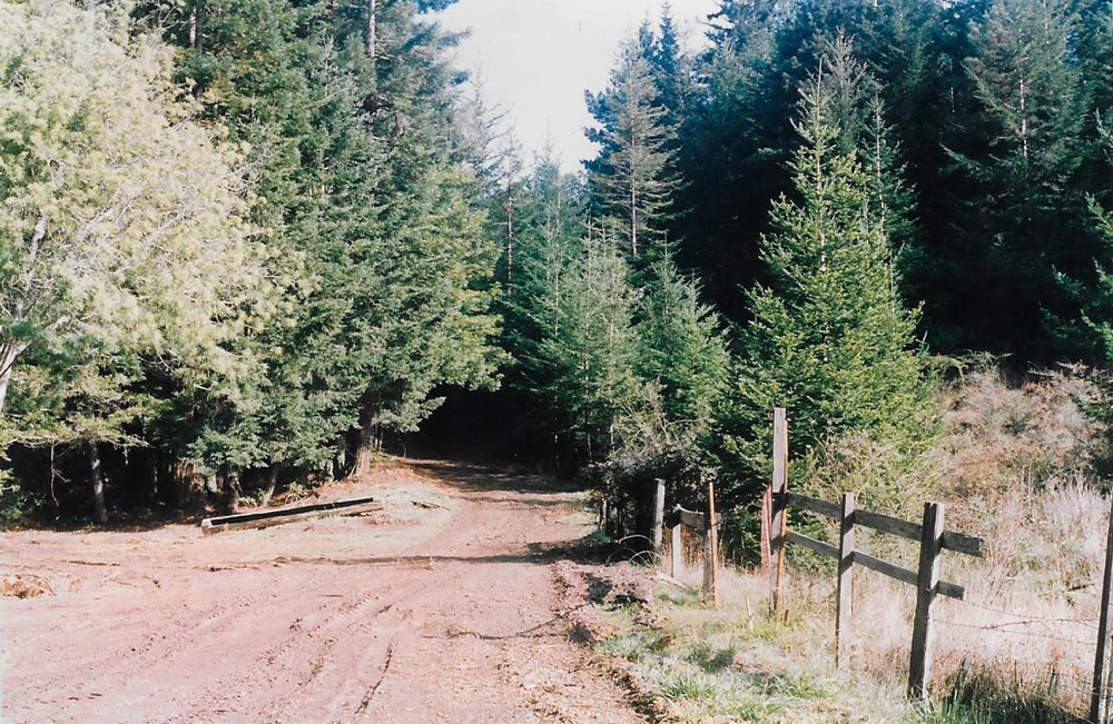 The road to Project 387 in 1990