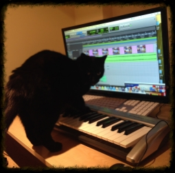 Shhh...Meow-sician at work!