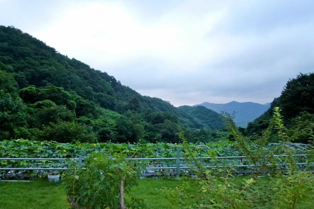 chodangbang garden.jpg