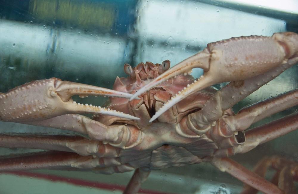 closeup crab.jpg