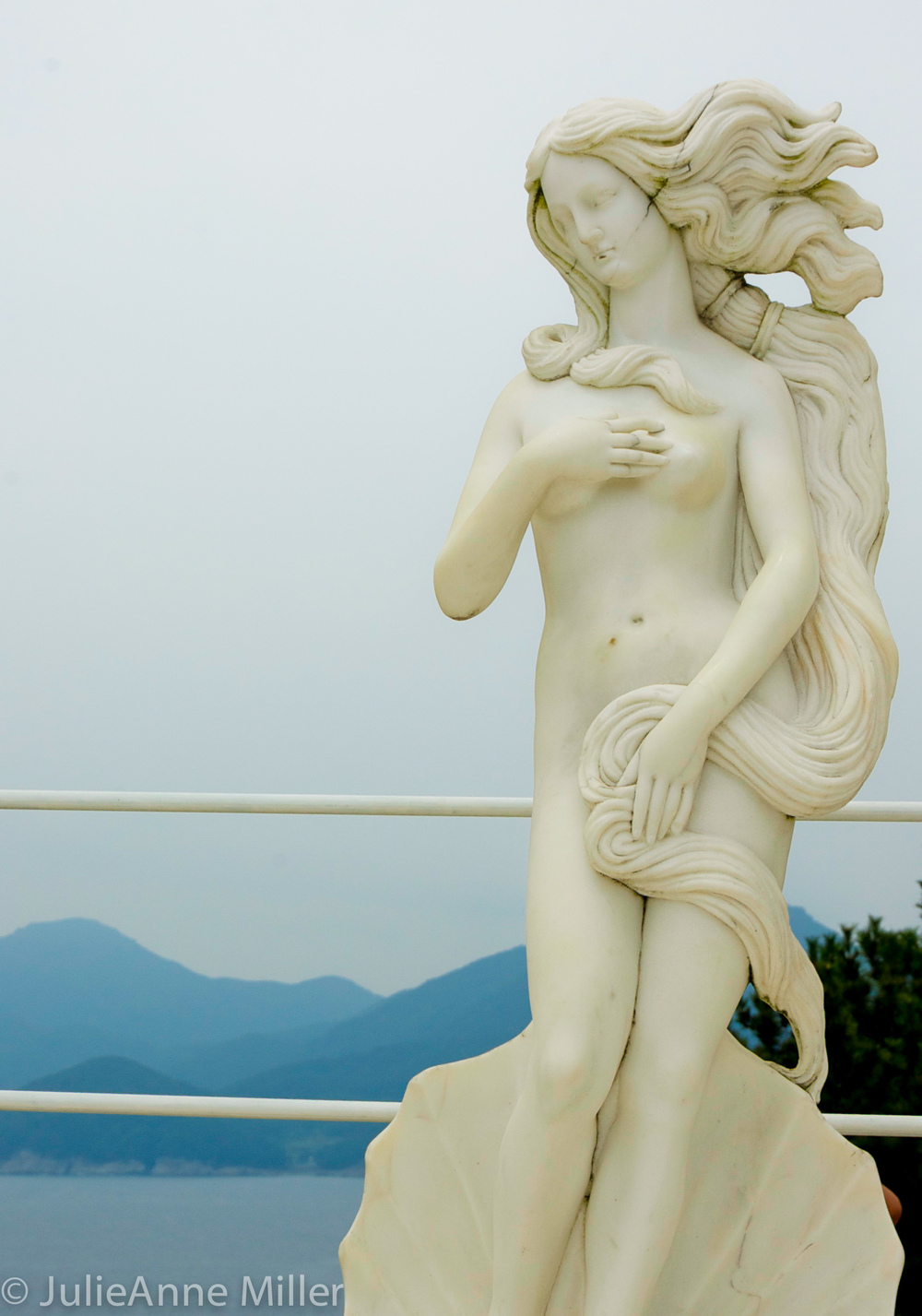 Venus Oedo.jpg