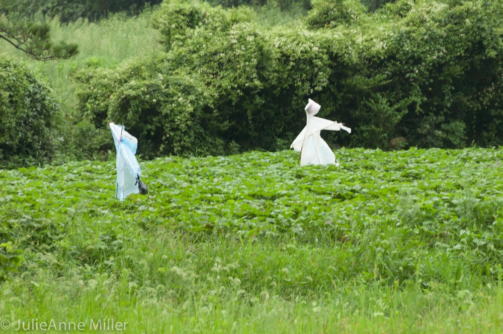 jeju scarecrows.jpg