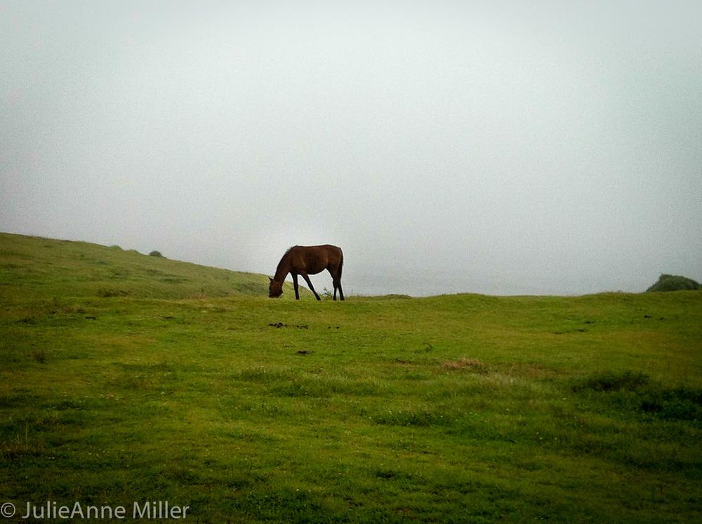 olle gil horse.jpg