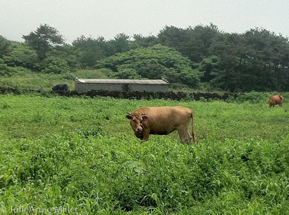 udo farm 3.jpg