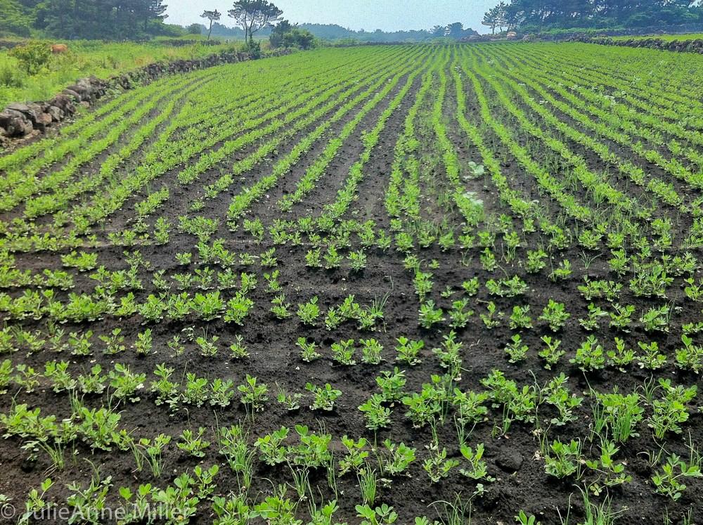 Udo farm.jpg