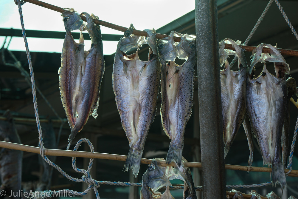 북어 drying fish