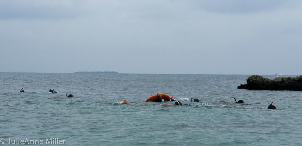 fellow snorkelers