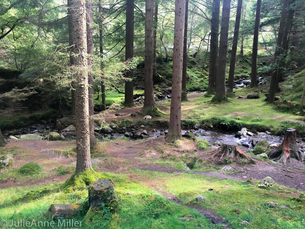 bog forest.jpg