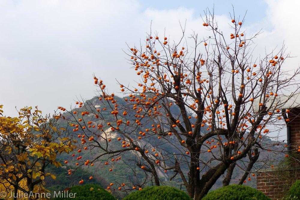Samcheong Park